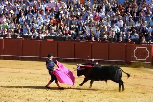 Stock Photo: 3153-583018 corrida, plaza de toros de la real maestranza, siviglia, spagna