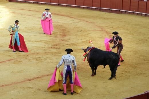 Stock Photo: 3153-583046 corrida, plaza de toros de la real maestranza, siviglia, spagna