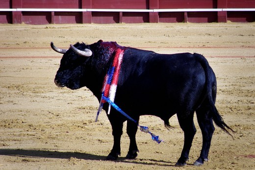 Stock Photo: 3153-583378 corrida, plaza de toros de la real maestranza, siviglia, spagna