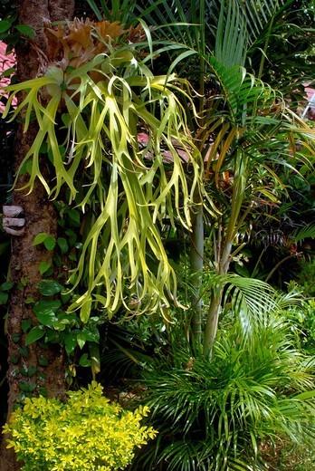 tropical plant, bali island, indonesia : Stock Photo