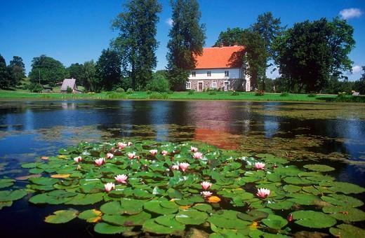 europe, latvia, gauja national park, turaida, waterlilies : Stock Photo
