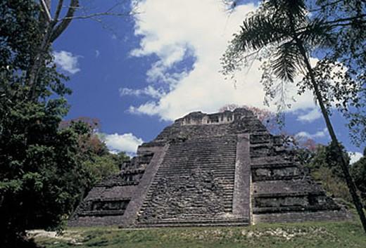 guatemala, peten, tikal, temple : Stock Photo