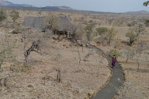 africa, kenya, campi ya kanzi : Stock Photo