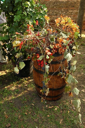 rassegna frutti antichi, castello di paderna, pontenure, emilia romagna, italia : Stock Photo