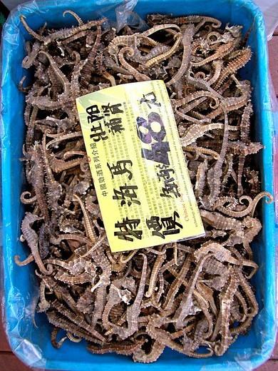 Stock Photo: 3153-611839 dried seahorses, hong kong, china