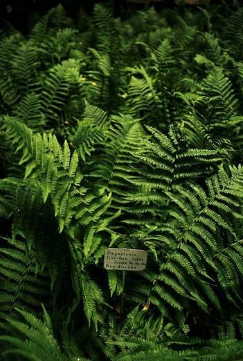 Stock Photo: 3153-617485 fern, orto botanico di padova, the world´s oldest academic botanical garden, padua, veneto, italy