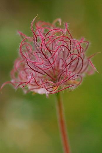 Stock Photo: 3153-619703 flower