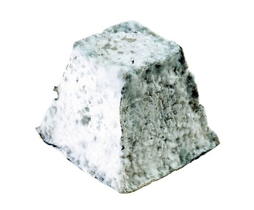 valencay cheese : Stock Photo