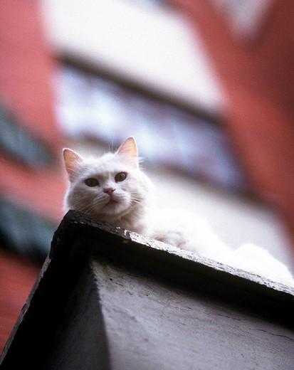 Stock Photo: 3153-620081 cat