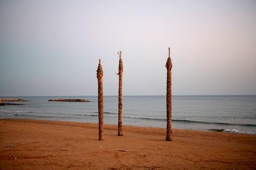 palms on the beach, marina di ragusa, sicily, italy : Stock Photo