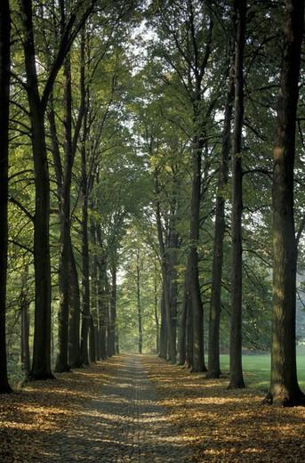Stock Photo: 3153-633865 ´la mandria´ natural park, venaria reale, italy