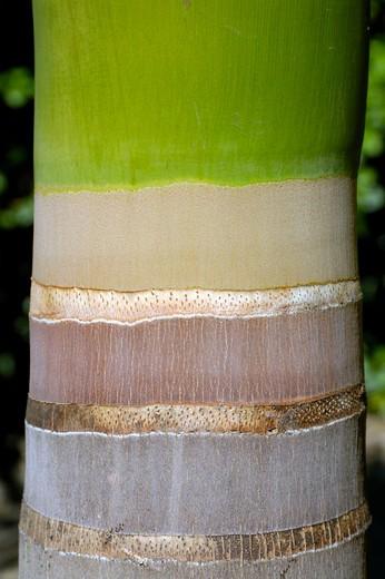 caribbean, dominican republic, palm : Stock Photo