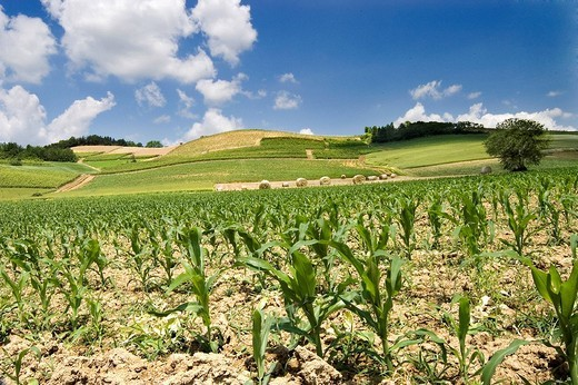 Stock Photo: 3153-650534 monferrato hills, piemonte, italy