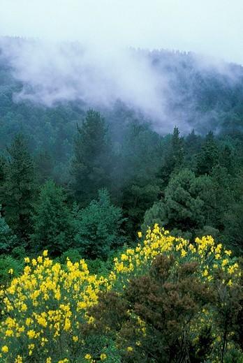 monte fossa delle felci natural reserve, aeolian salina, italy : Stock Photo