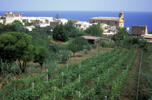malfa village and malvasia vineyard, aeolian salina, italy : Stock Photo