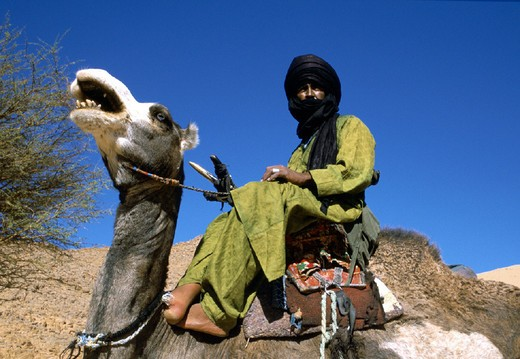 Stock Photo: 3153-657760 africa, algeria south, tuareg camel drivers