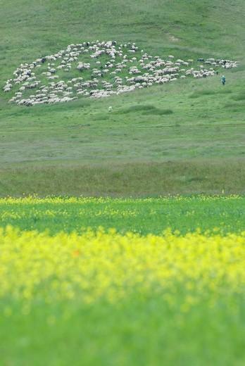 pasture : Stock Photo