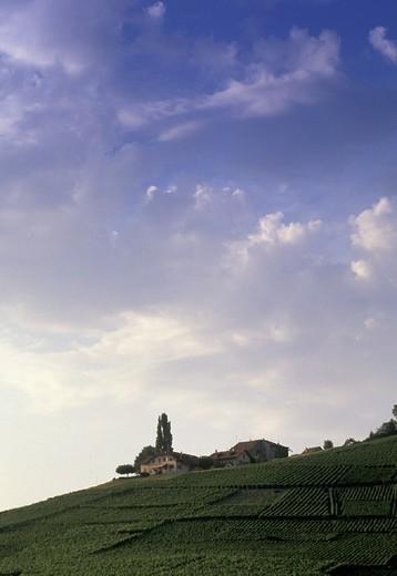 ´lavaux´ vineyards at aran, lutry, switzerland : Stock Photo