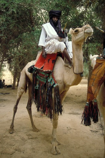 niger, agadez, tuareg land : Stock Photo