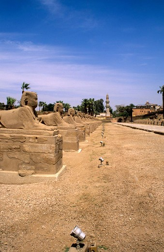 Stock Photo: 3153-685346 africa, egypt, luxor, temple of luxor, path of sphinx