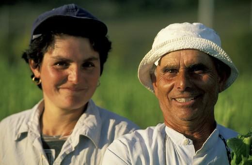 tobacco harvesting, mercatale, italy : Stock Photo