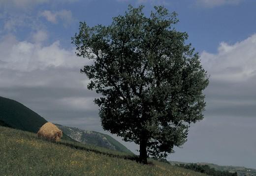 Stock Photo: 3153-712423 italy, abruzzo, country