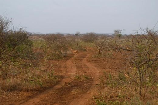 Stock Photo: 3153-712680 africa, kenya, campi ya kanzi