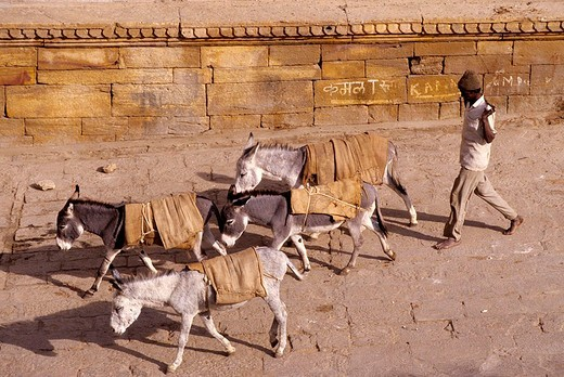 asia, india, rajasthan, jaisalmer, donkeys : Stock Photo