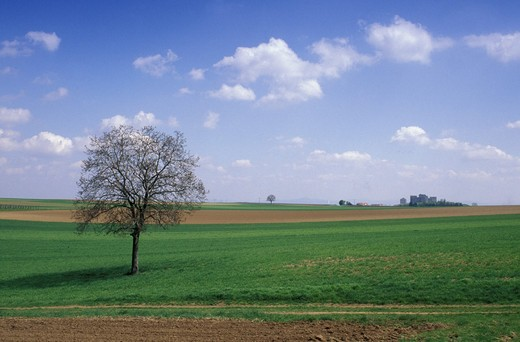 country landscape, colonia, germany : Stock Photo
