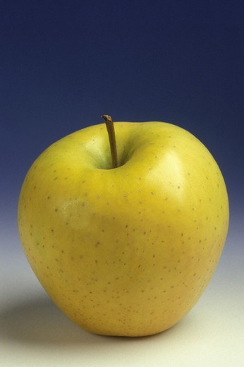 Stock Photo: 3153-721944 ´golden delicious´ apple fruit, studio, italy