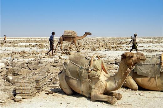 Stock Photo: 3153-725471 lago salato di karum o asale, dancalia, afar, etiopia