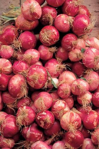 Stock Photo: 3153-733266 onions