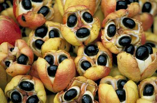 Stock Photo: 3153-733877 ackee, jamaican famous fruit