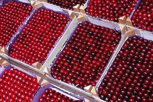 Stock Photo: 3153-737650 marostica cherries