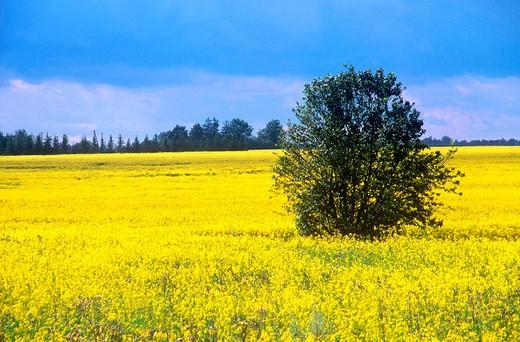 europe, estonia, country : Stock Photo