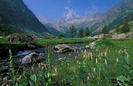 piano del valasco, alpi marittime park, italy : Stock Photo