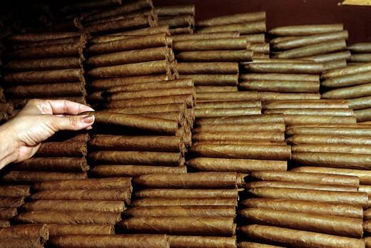 cuba, havana, partagas, the most famous cigars factory : Stock Photo
