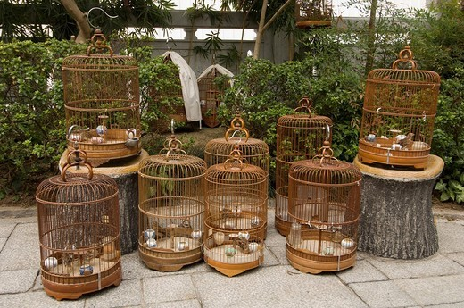 Bird Garden market, Mong Kok district, Kowloon, Hong Kong, China. : Stock Photo