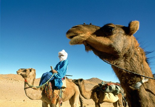 Stock Photo: 3153-767043 africa, algeria south, camel drivers