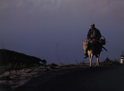 italy, toscana, isola del giglio : Stock Photo