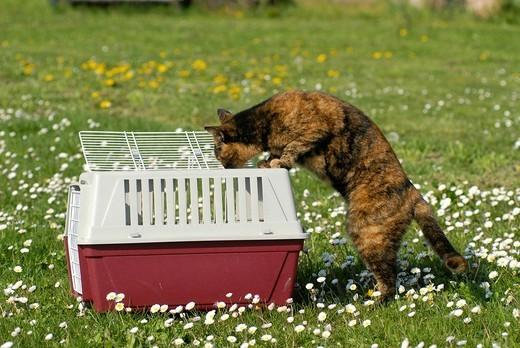 Stock Photo: 3153-772221 half_breed cat