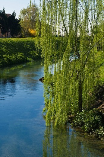 Stock Photo: 3153-774730 willow on canal, soave, italy