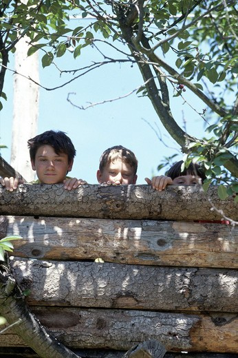 children on a tree : Stock Photo