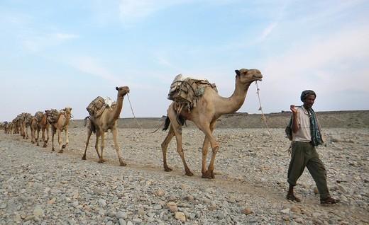 nomadi, dancalia, afar, etiopia : Stock Photo