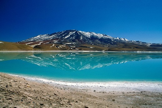 bolivia, laguna colorada : Stock Photo