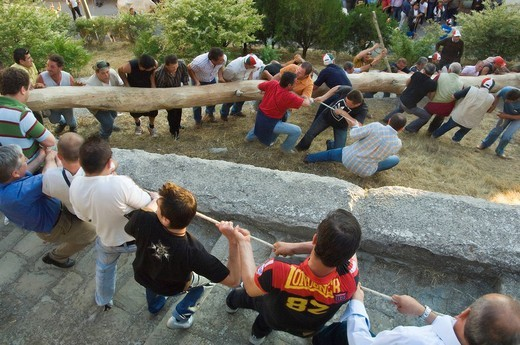 festa del maggio, arboreal rite, accettura, parco regionale di gallipoli cognato e delle piccole dolomiti lucane, basilicata, italy : Stock Photo