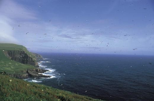 Stock Photo: 3153-788535 denmark, faroe islands, mykines island