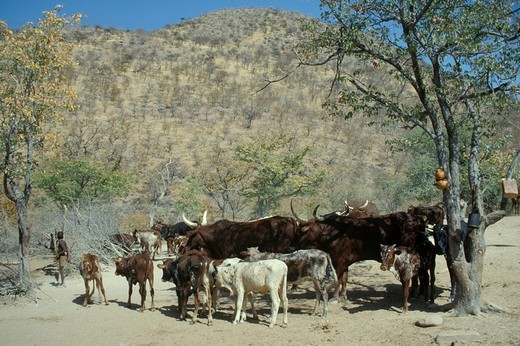namibia, himba people : Stock Photo