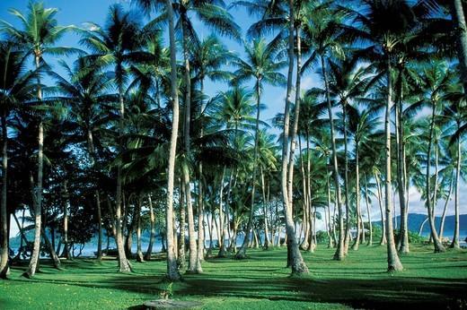 Stock Photo: 3153-796250 hawaii, usa