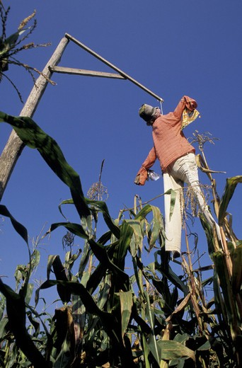 Stock Photo: 3153-803847 scarecrow, piani di spagna, italy